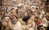 The Future of Pastoralism