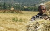 Resilient Livelihoods
